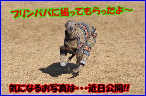 DSC_5139_20130205000630.jpg