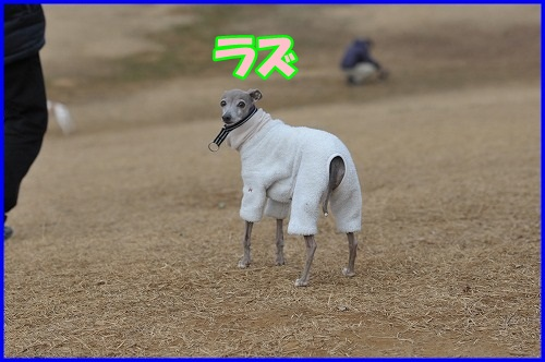 DSC_5276.jpg