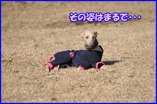 DSC_5380.jpg