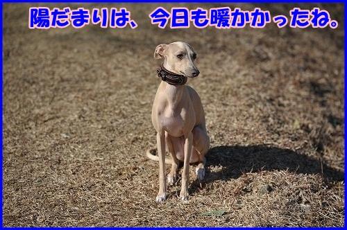 DSC_5455.jpg