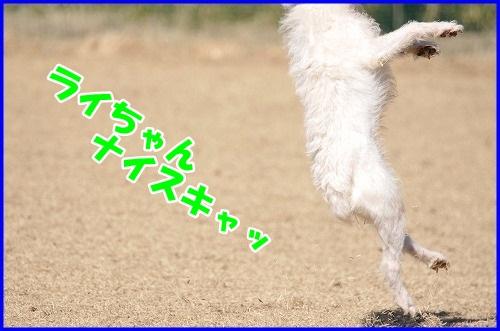 DSC_5637.jpg