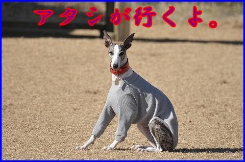 DSC_5761.jpg