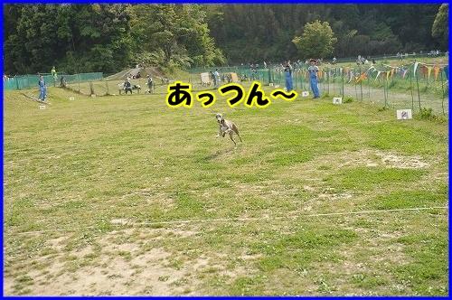 DSC_7215_20130430000312.jpg