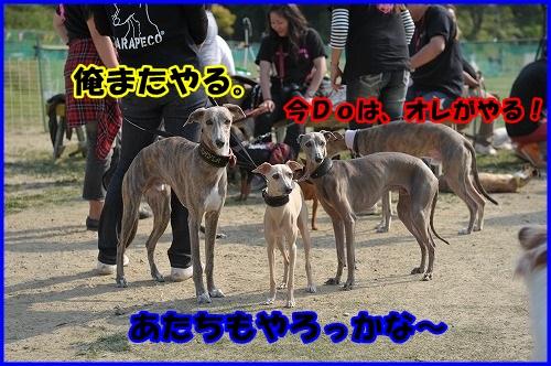 DSC_7240_20130430000737.jpg