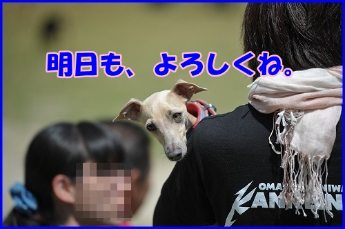 DSC_7422_20130505221129.jpg