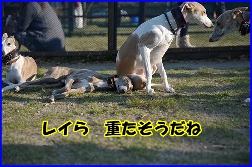DSC_7515.jpg