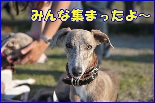 DSC_7519.jpg