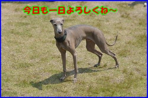 DSC_7555_20130508203920.jpg