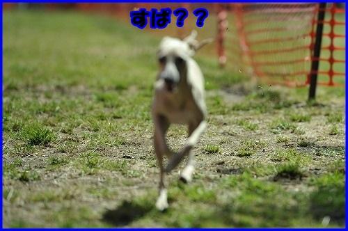 DSC_7781_20130516201202.jpg