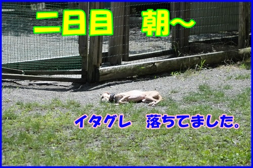 DSC_9096_20130718225341.jpg