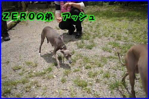 DSC_9156_20130718230334.jpg