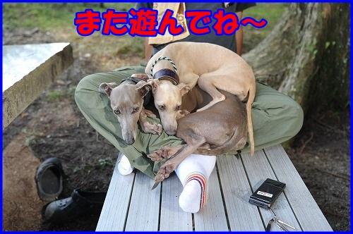DSC_9310_20130718231155.jpg