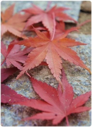 落ちている葉っぱさん
