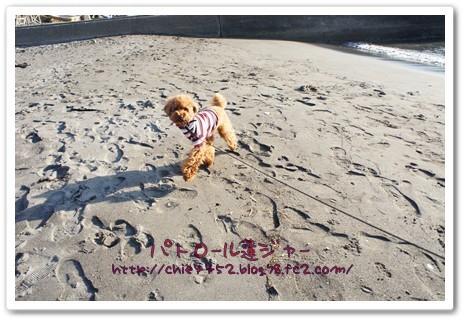 砂浜 異常ありません