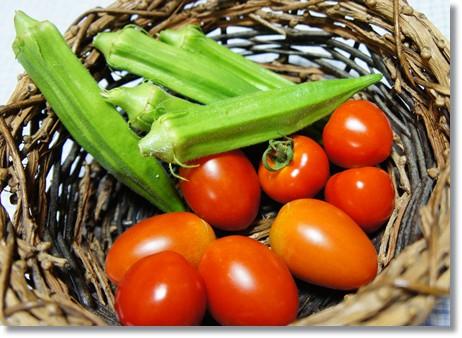 今日採れ野菜