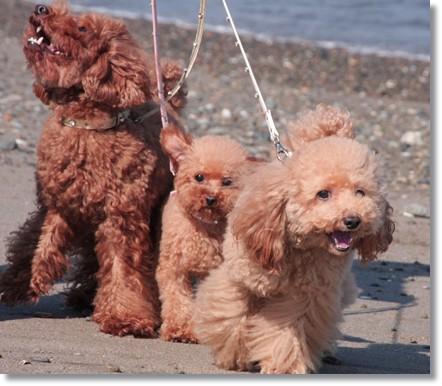 砂浜のお散歩だよ