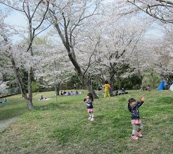 桜淵公園3