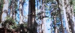 三峯神社の縁結びの木1(三峰ではない)