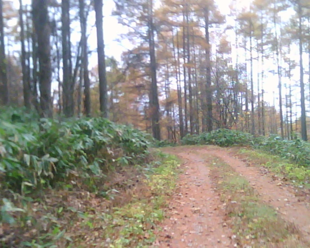 大谷林道へ1