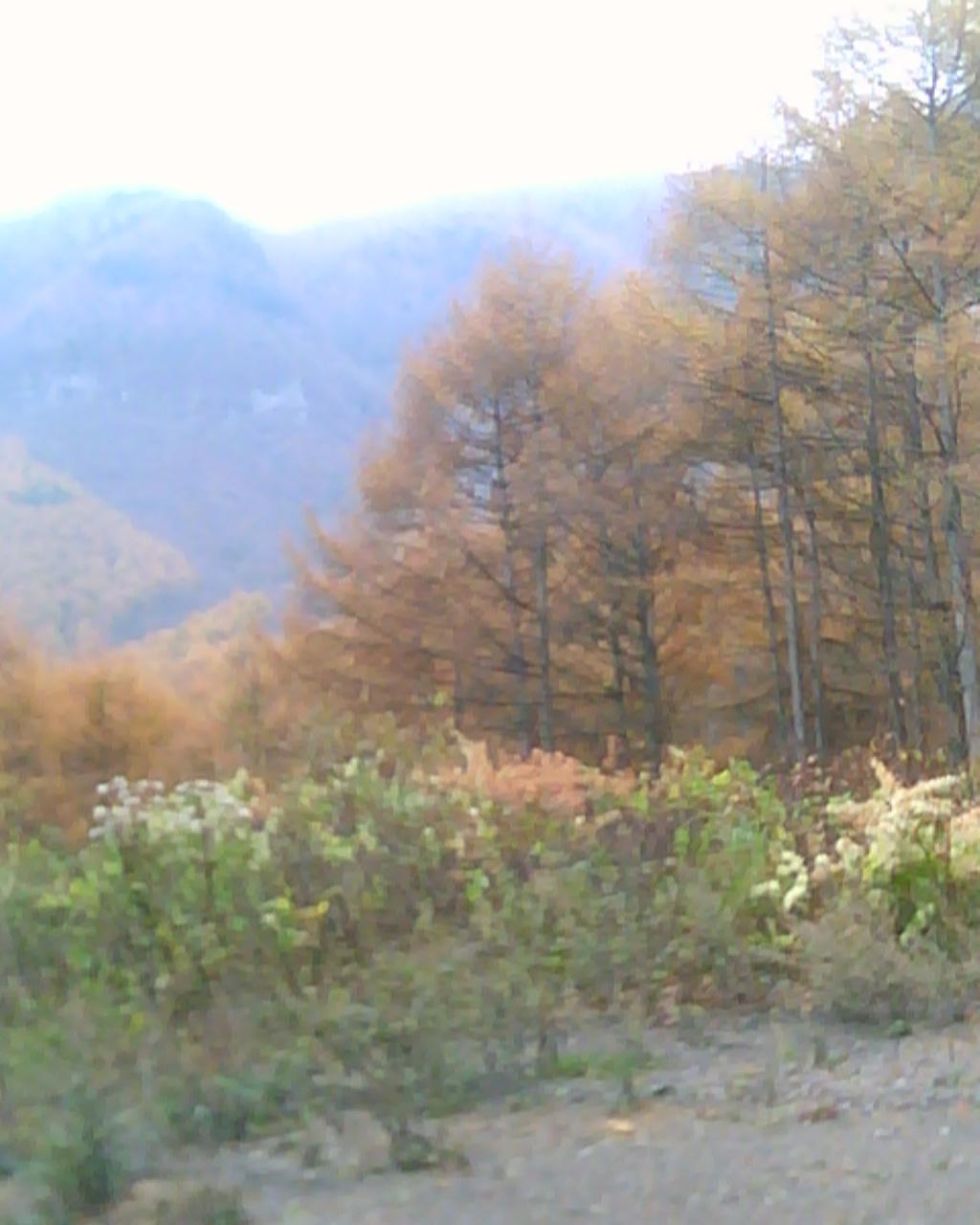 大谷林道へ2