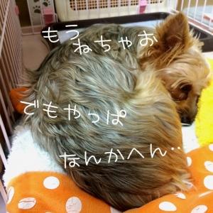 2014111521361084b.jpg
