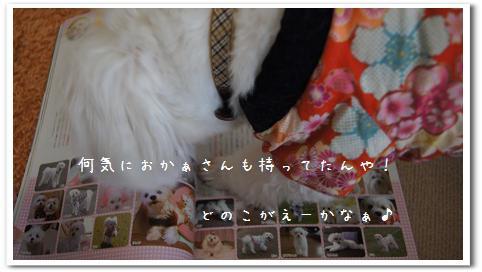 4nyLx0sfePUM8_C.jpg