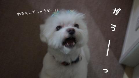8W_KC.jpg