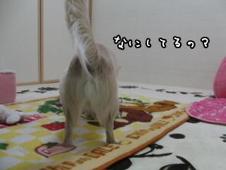 CIMG0104.jpg
