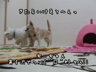 CIMG0110.jpg
