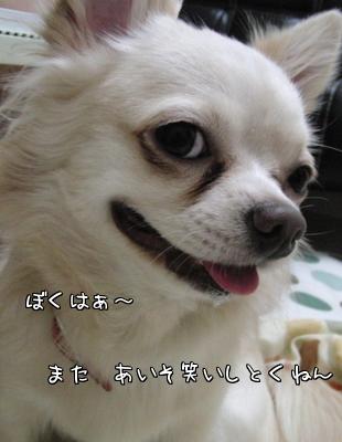 CIMG0175-1.jpg