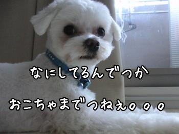 CIMG0279_20100316220436.jpg