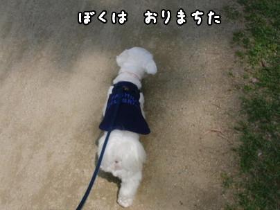 CIMG0771-1.jpg