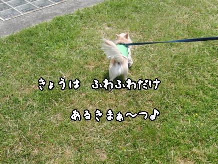 CIMG0779-1.jpg