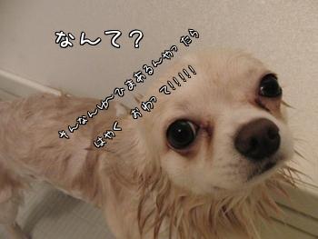 CIMG0787.jpg