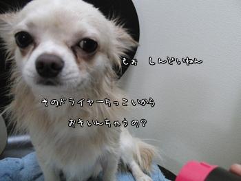 CIMG0794.jpg