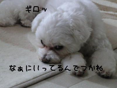 CIMG0818.jpg