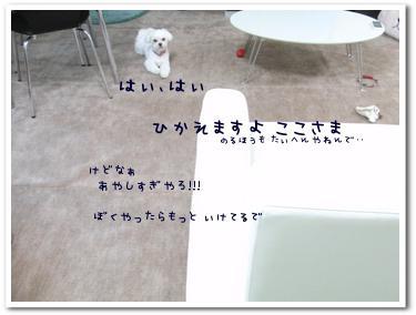 CIMG0836.jpg