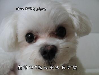 CIMG0914_20100908195019.jpg