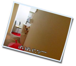 CIMG0955.jpg