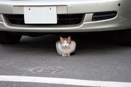 cat0007-009_m.jpg
