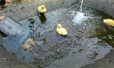 20110602遊泳中