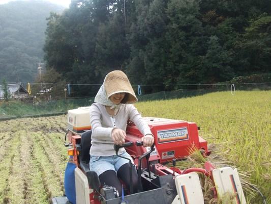 2011稲刈り2