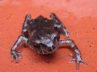 20100707蛙1