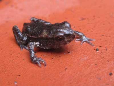 20100707蛙2