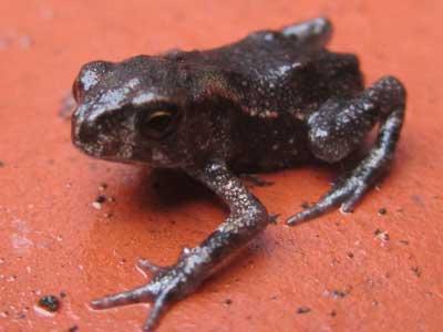 20100707蛙3