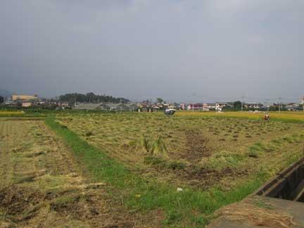 20100920稲刈り
