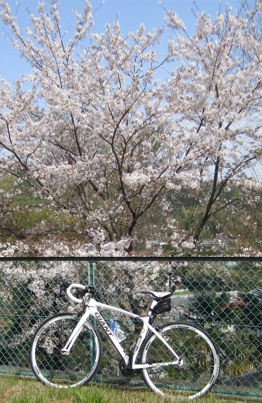 201100416二宮の桜とGIANT DEFY ADVANCED 3(大)