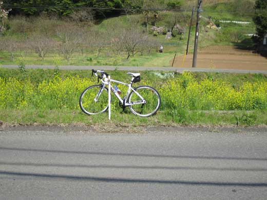 20110422菜の花とGIANT DEFY ADVANCED3