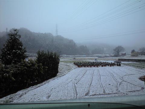 20110211雪景色