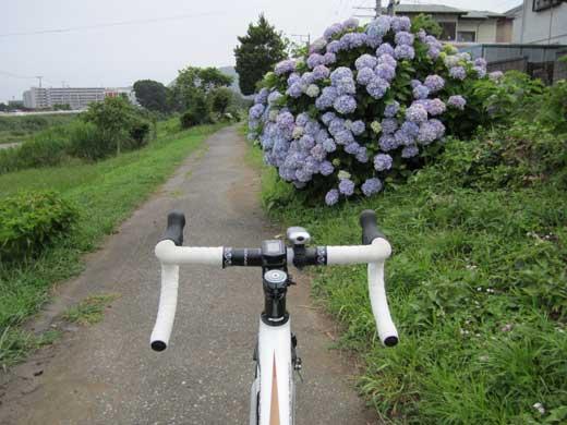 20110627紫陽花とDEFY